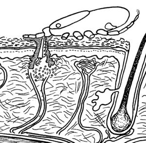 Male Piercing Diagram Mouth Piercings Diagram Wiring