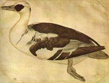 File Pisanello Disegni Louvre - Wikimedia Commons