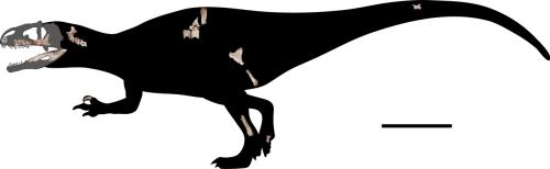 Siamraptor.png