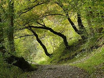 English: Tree path