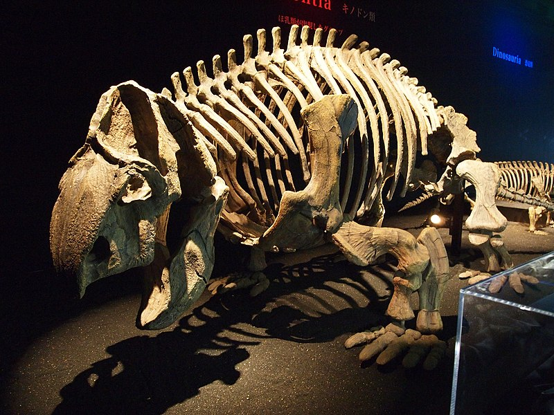 File:Ischigualastia skeleton.jpg