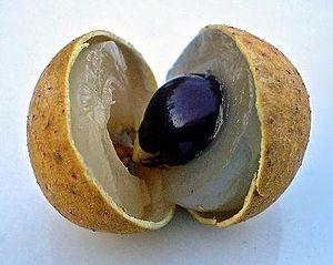 Fruta LONGAN (Dimocarpus longan Lour)