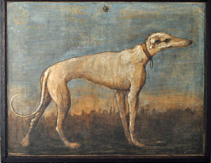 Greyhound, Giandomenico Tiepolo