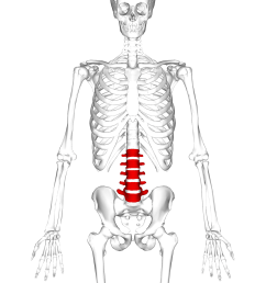 the human spine diagram [ 1200 x 1200 Pixel ]