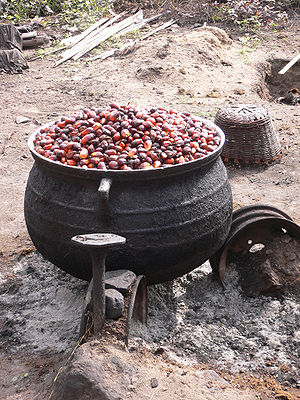 Cooking palm nuts to soften the nuts for oil e...