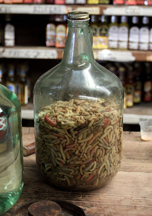English: Gusano de Maguey in a bottle, waiting...