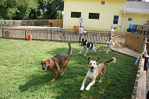 English: Dogs Running in the yard at Affection...