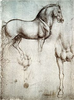 Study of horse