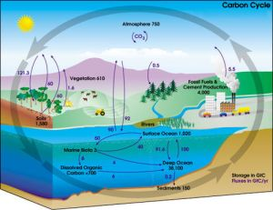 Carbon cycle  Simple English Wikipedia, the free encyclopedia