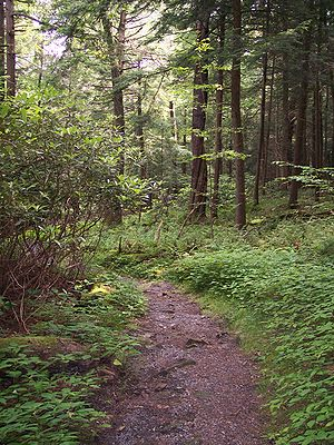 The Cathedral Trail in Cathedral State Park ne...