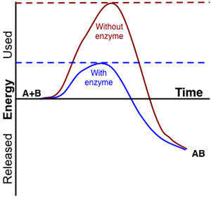 Enzyme activation energy