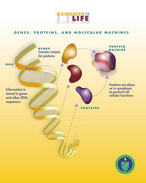 Protein Machines
