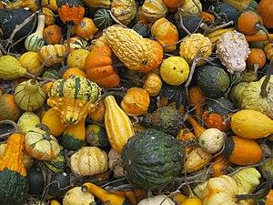 English: Pumpkins.