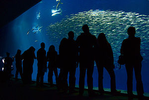 English: Interior shot of Monterey Bay Aquarium