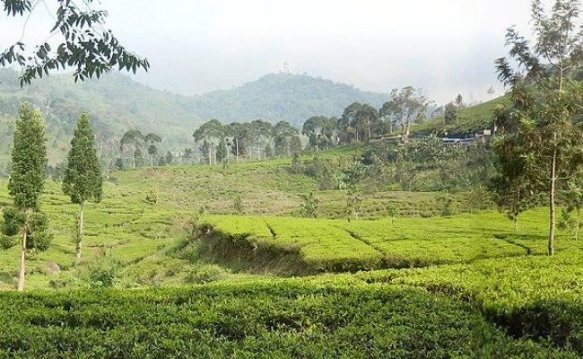Bogor Raya Travel Guide At Wikivoyage