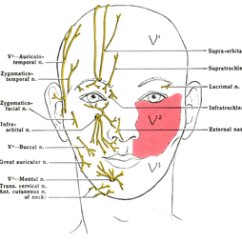 Trigeminal Nerve Diagram Us Government Checks And Balances Wikiwand Of Facial Sensory Nerves Front View