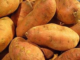 Ipomoea batatas, Convolvulaceae, Sweet Potato,...