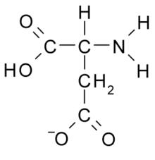 aspartate — Wiktionnaire