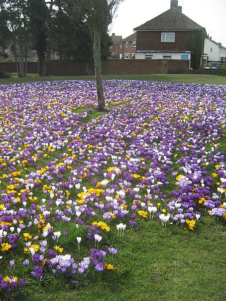 1000 lawns