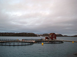 English: Fish farm and floating building at No...