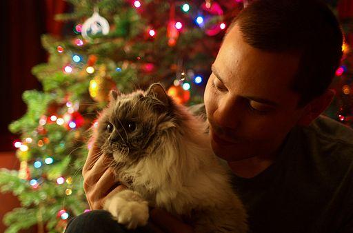Christmas Cat - Flickr - Joe Parks
