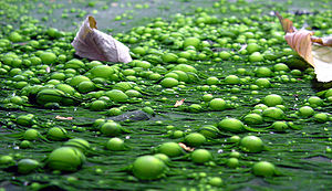Eutrophication is caused by the enrichment of ...