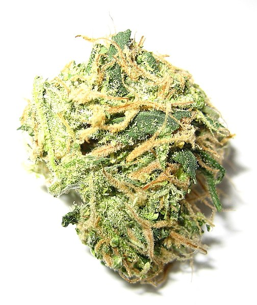 File:Marijuana small.jpg