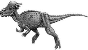 Sketch of a pachycephalosaur of uncertain syst...