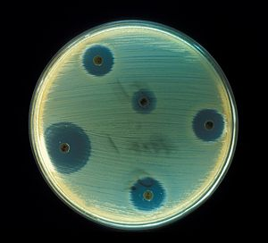 Staphylococcus aureus - Antibiotics Test plate
