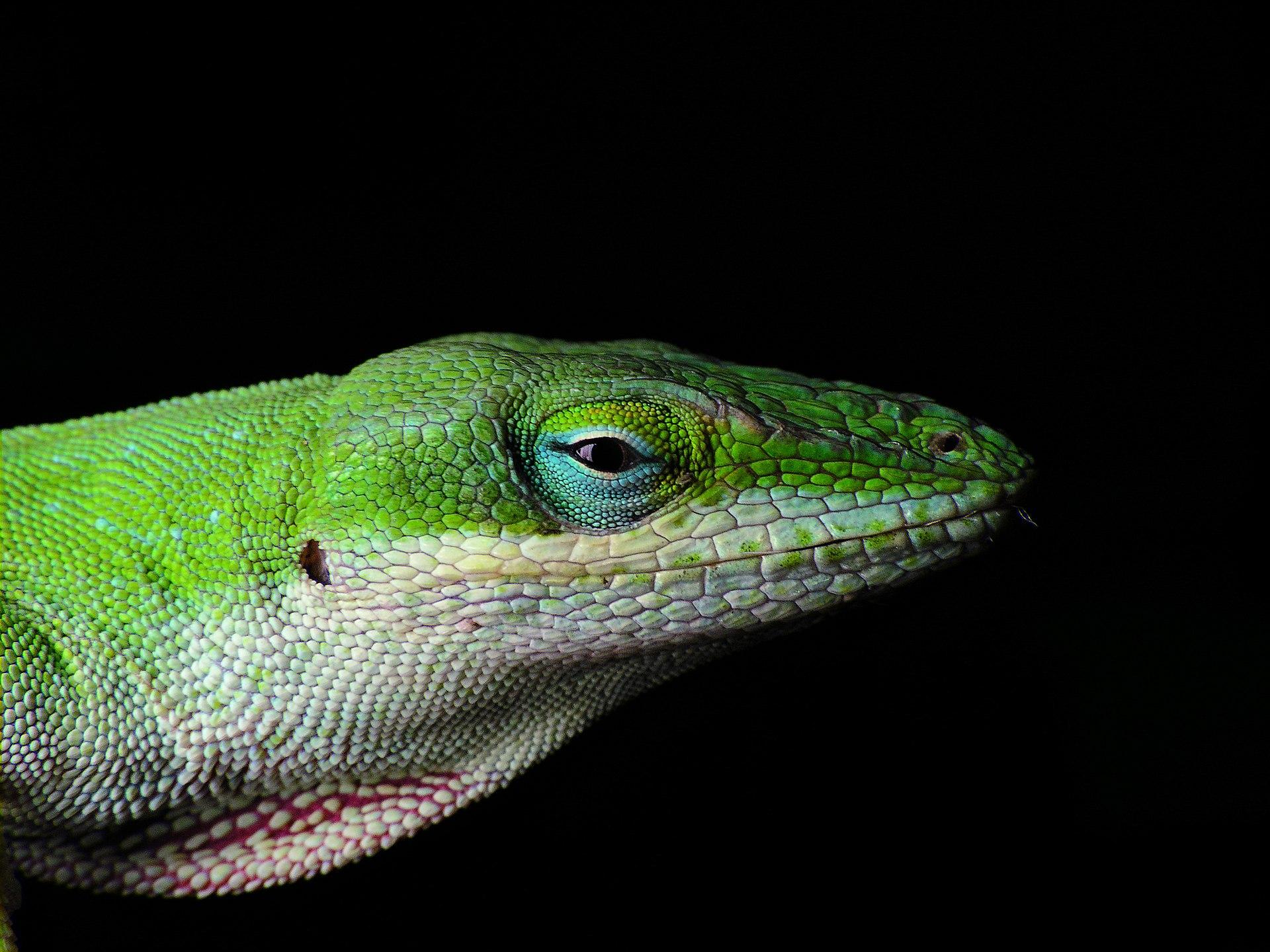 Lizard In My Backyard lizard in my backyard – dollybhargava image