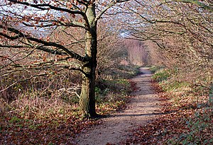 English: Autumn Path - Ashton