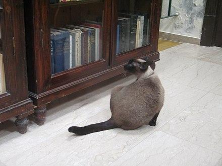 圖書館貓 - Wikiwand