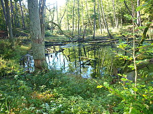 The habitat of beavers