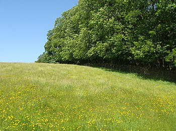 English: Buttercup meadow A wonderful Maytime ...