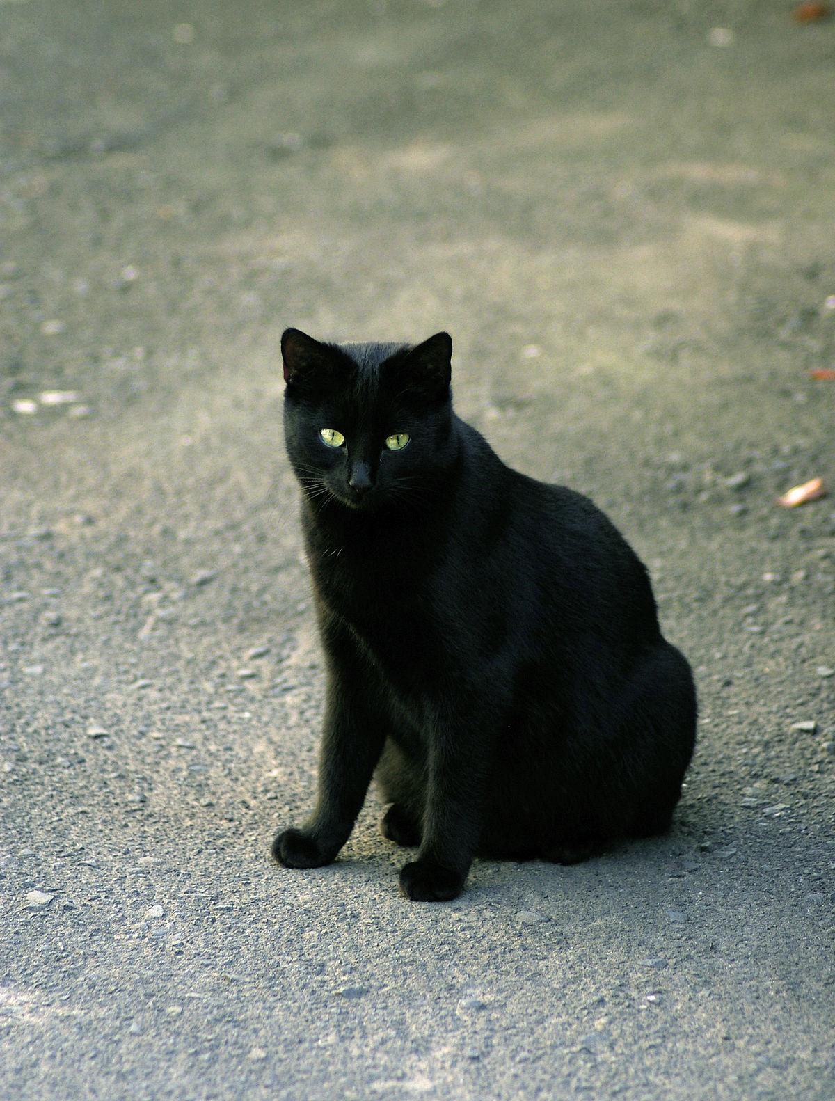 C'est Pas Sorcier Les Chats : c'est, sorcier, chats, D'argent, Wikipédia