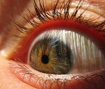 English: Eyeball