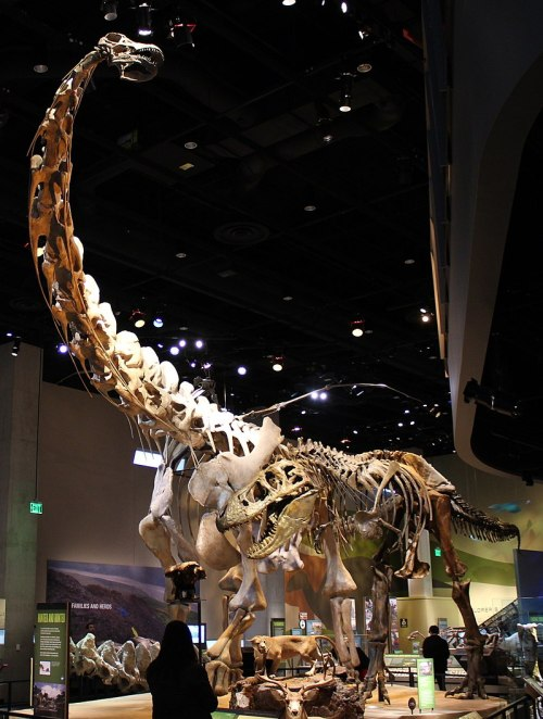 Perot Museum Alamosaurus and Tyrannosaurus.jpg