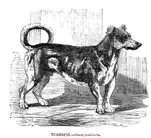 Turnspitdog-1862.jpg
