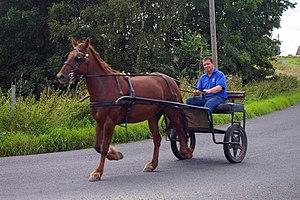 English: Carbon-neutral transport ... trotting...