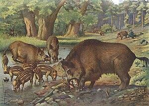 Heubach wild boar