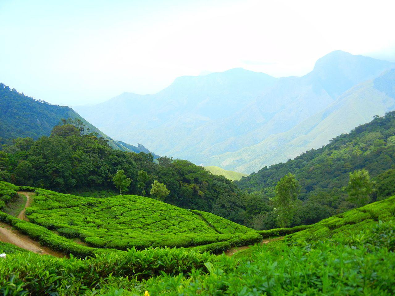 FileThe Kanan Devan Hills Tea estates of Munnar Kerala
