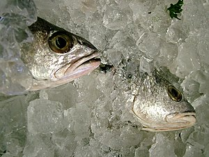 Fish Packed in Ice