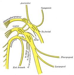 vagus nerve diagram wiring for alternator and starter wikipedia