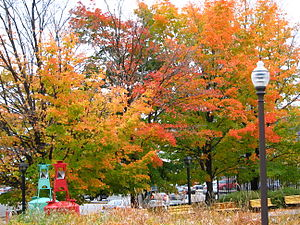 Maple trees, fall foliage, Quebec City