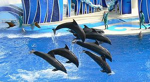 Performing bottlenose dolphins - from left to ...