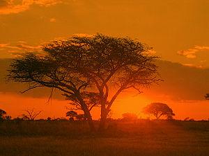English: Sunrise Matobo National Park