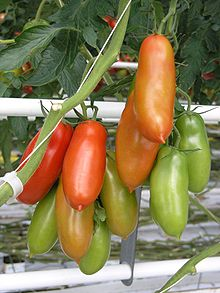 Tomate San Marzano  Wikipedia la enciclopedia libre