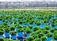 File:Cutchogue - Oregon Road - Plant Nursery.jpg ...