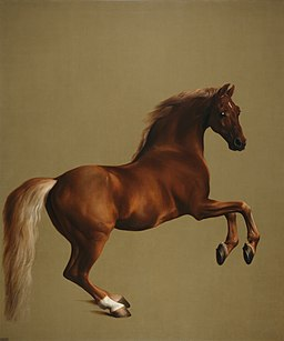 Whistlejacket by George Stubbs edit