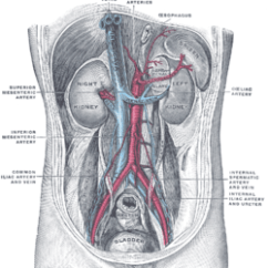 Gastric Bypass Diagram 91 240sx Ignition Wiring Adrenal Artery - Wikipedia